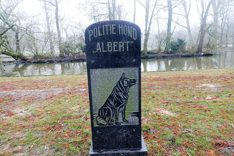 Nederland, Amsterdam, Oosterpark, Politie Hond Albert is een beeldje uit 1924 dat geplaatst is in het Oosterpark te Amsterdam. Het beeldje bestaat uit een granieten grafsteen op een stenen sokkel.Het beeldje is neergezet ter nagedachtenis van politiehond Albert (roepnaam Ab of Appie), die leefde van 1916 tot en met maart 1923. De privéspeurhond was een Tervuerense herder van agent Water, die de Amsterdamse politie af en toe hielp bij het oplossen van misdrijven. De eerste trainingen van de hond vonden in genoemd park plaats. De hond stierf een droevig einde. Zijn begeleider moest opgenomen worden in het Burgerziekenhuis, de hond stikte thuis in een zakdoek van zijn baas. Het succes van de speurhond zou volgens overlevering hebben geleid tot de oprichting van de Hondenbrigade.Het beeldje kwam er na veel inspanningen; het waren crisisjaren en niet iedere agent vond het de moeite waard geld te doneren voor dit beeldje. Gedurende de jaren is het beeldje verplaatst en op een lagere sokkel neergezet.Het beeldje bevat een voorbeeld van onjuist spatiegebruik. Het is onbekend wie het beeldje heeft ontworpen of geleverd. Ook zijn er twijfels of er wel een Tervuerense herder is afgebeeld. (wikipedia), 29 december 2016, foto: Katrien Mulder