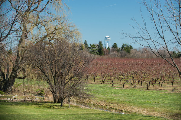 JOED VIERA/STAFF PHOTOGRAPHER- Olcott, NY- A view on West Bluff towards the Olcott Water Tower