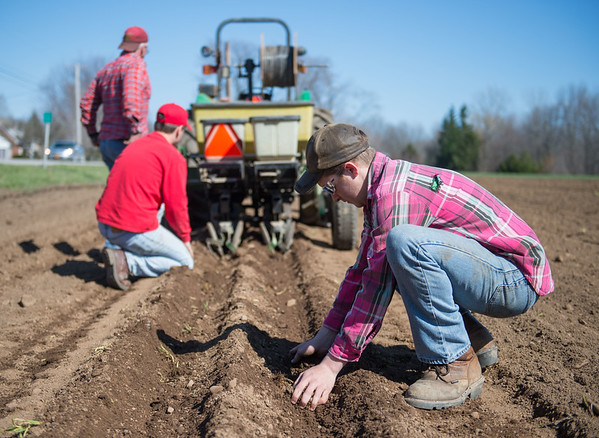 JOED VIERA/STAFF PHOTOGRAPHER- Cambria, NY- Dylan Wolfe, right, helps Jeff and Will Hall check planted corn at Coulter Farms
