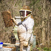 JOED VIERA/STAFF PHOTOGRAPHER- Middleport, NY-Bruce Fiegel tends to his bees.