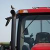 JOED VIERA/STAFF PHOTOGRAPHER- Middleport, NY-A bird lands on a tractor at a Middleport farm.