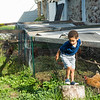 JOED VIERA/STAFF PHOTOGRAPHER-Lockport, NY-  Ethan Roy plays by chickens at McCollum orchards.