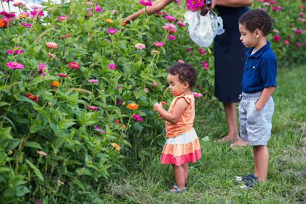 JOED VIERA/STAFF PHOTOGRAPHER-Lockport, NY-  Children pick flowers at McCollum orchards.