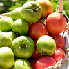 JOED VIERA/STAFF PHOTOGRAPHER-Lockport, NY-Peppers in a basket  outside of Windsor Village.