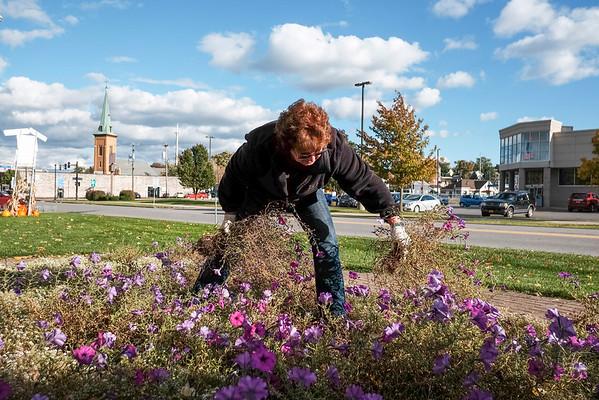 JOED VIERA/STAFF PHOTOGRAPHER-Lockport, NY- Terry Hayner plucks petunias from Ida Fritz Park.