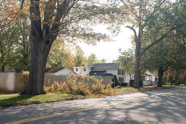JOED VIERA/STAFF PHOTOGRAPHER-Lockport, NY-A fallen tree limb on Clinton Street.