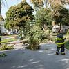 JOED VIERA/STAFF PHOTOGRAPHER-Lockport, NY-A fallen tree limb on Beverley Place nearly struck a vehicle and block traffic.