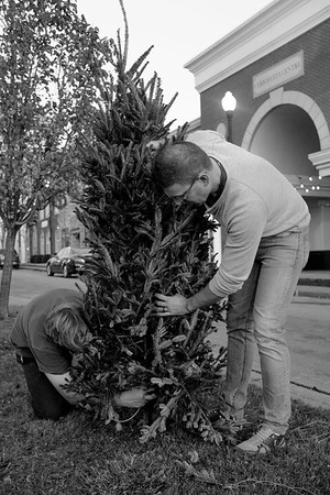 JOED VIERA/STAFF PHOTOGRAPHER- Lockport, NY-Chris Parada and Chris Miller install christmas trees along a Main Street median.