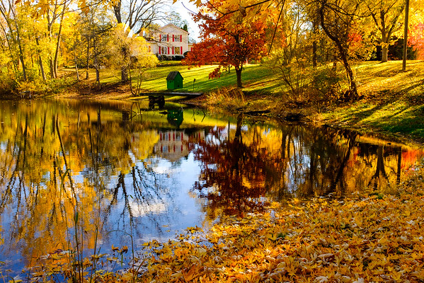 JOED VIERA/STAFF PHOTOGRAPHER-Lockport, NY-Golden leaves fall near a pond by Groff Road.