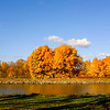 JOED VIERA/STAFF PHOTOGRAPHER-Lockport, NY-Trees turn golden along the Canal across from Groff Road.