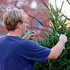 JOED VIERA/STAFF PHOTOGRAPHER- Lockport, NY-Chris Miller installs a christmas tree along a Main Street median.