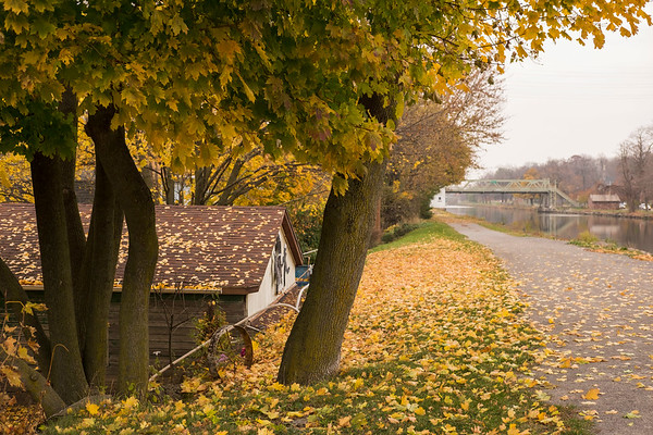 JOED VIERA/STAFF PHOTOGRAPHER-Lockport , NY-Hundreds of golden leaves rest on the ground and Bicycle Canal Path.