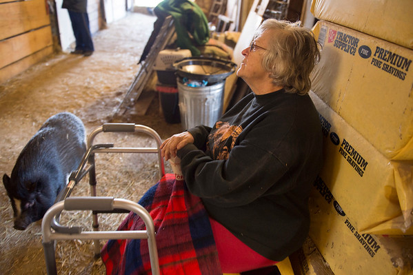 JOED VIERA/STAFF PHOTOGRAPHER-Lockport, NY-  Stella, a pig, walks by Sandi Pfohl inside the Lakeview Animal Sanctuary barn.