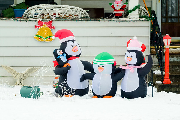 Joed Viera/Staff Photographer Lockport, NY- Holiday penguin decorations adorn the lawn of a home on Clinton Street.