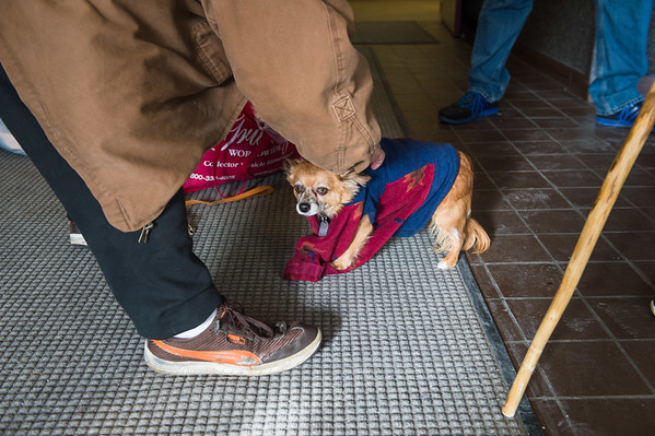 Joed Viera/Staff Photographer Lockport, NY-Tobin Little places a sweater on Freckles, his 1-year old long hair chihuahua during Paulette Coty's visit to Urban Park Tower for Mario's Pet Food Pantry.