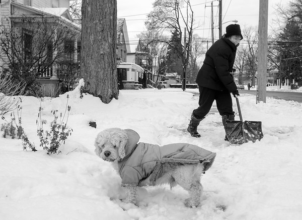 Dusty keeps warm in his jacket as his owner Abigail Lennon shovels snow off the sidewalk in front of her Ontario Street home.