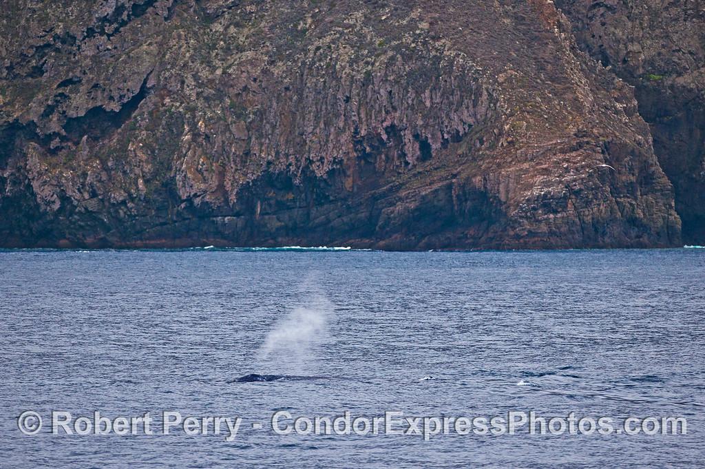 Santa Cruz Island sea cliffs and a gray whale spout.