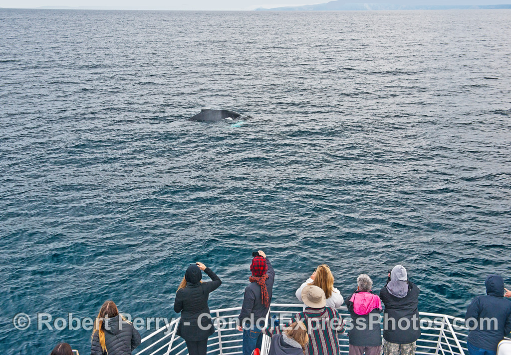 A friendly humpback and its fans.