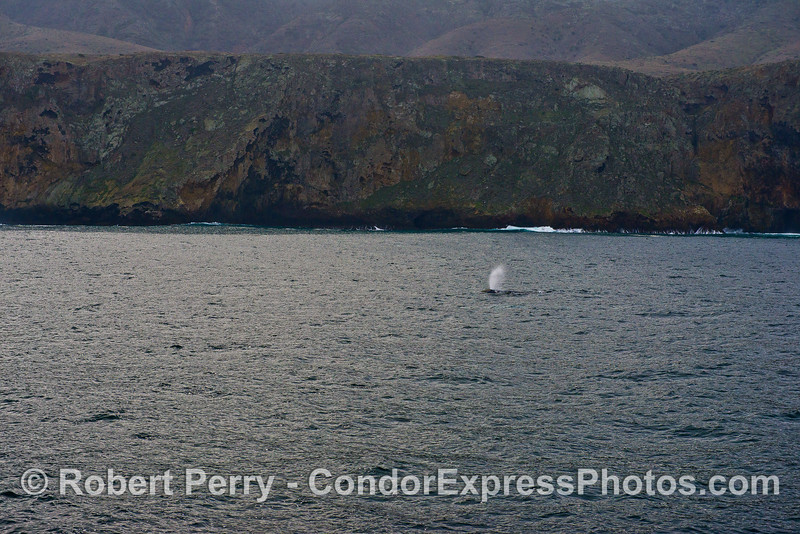 Santa Cruz Island and a gray whale spout.