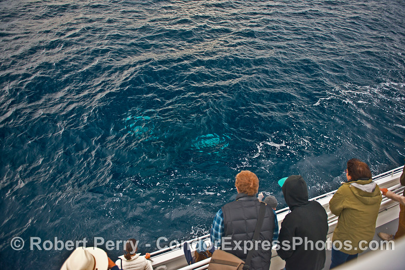 Humpback whale under the boat.