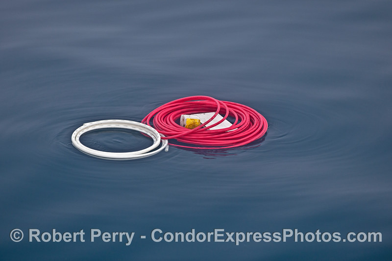 Plastic hose coils that probably fell off a boat.