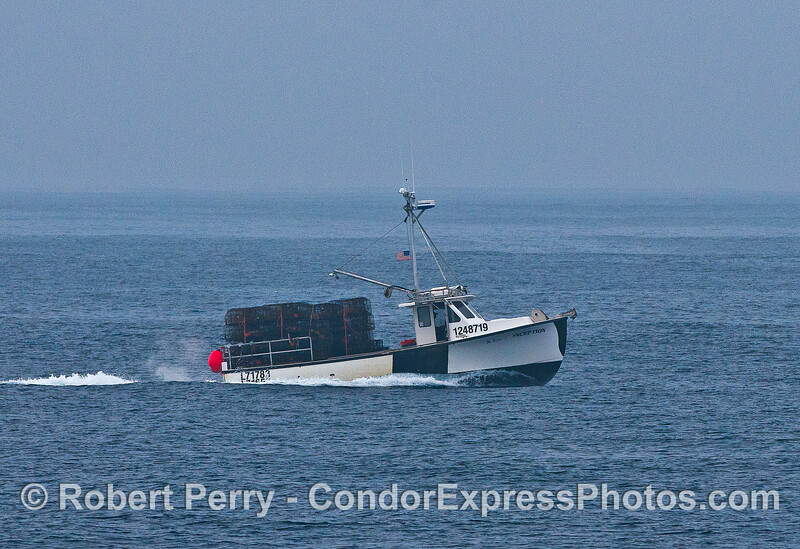 """Commercial lobster boat """"Miss Conception"""" bringing in traps at the end of the season.  I love the name of this boat."""