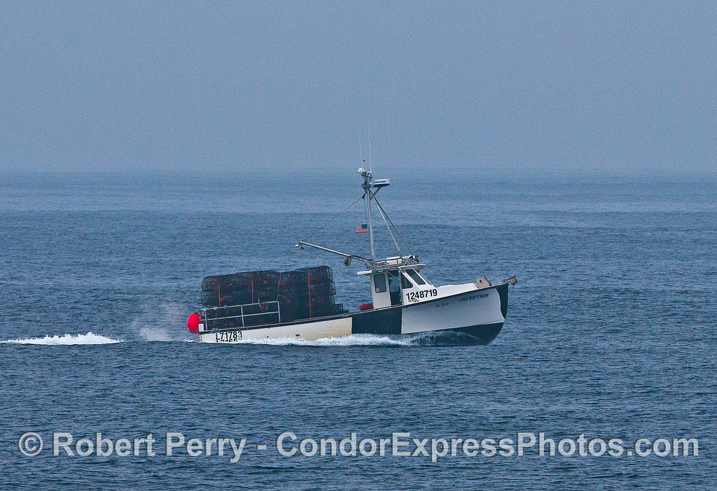 "Commercial lobster boat ""Miss Conception"" bringing in traps at the end of the season.  I love the name of this boat."