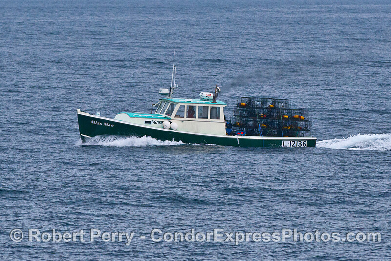 Bringing the lobster traps back in as the season ends next week:  vessel Miss Mae, Santa Barbara.