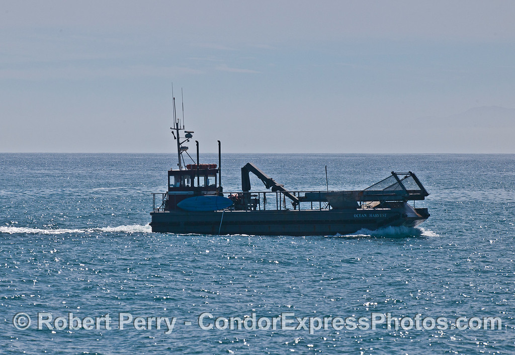 "Kelp cutter ""Ocean Harvest"" mows the kelp bed to feed Abalone at the Cayucos farm."