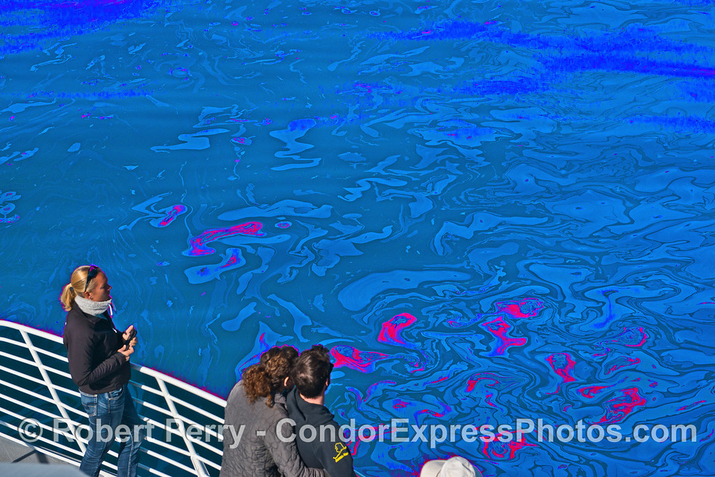 Whale lovers enjoy an abstract ocean surface.  You don't see that every day.