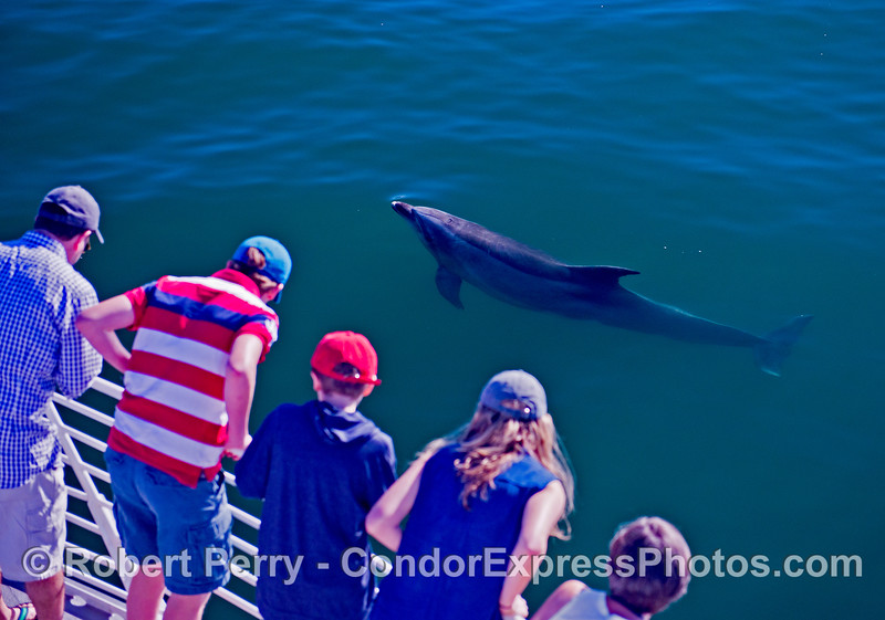 Bottlenose dolphin and whale watchers.