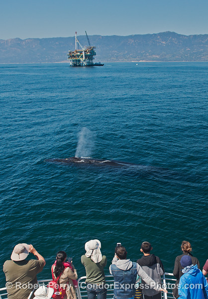....with a humpback whale in the middle, spouting.