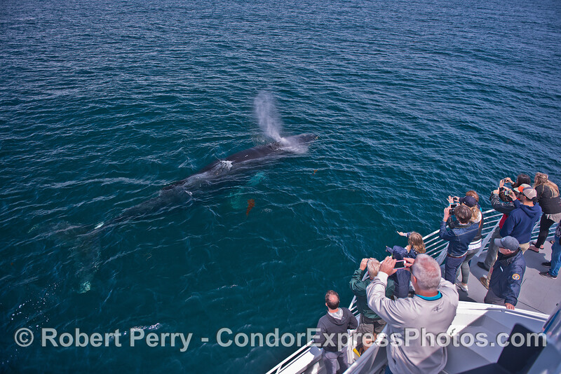 Friendly humpback whale visits its fan club.