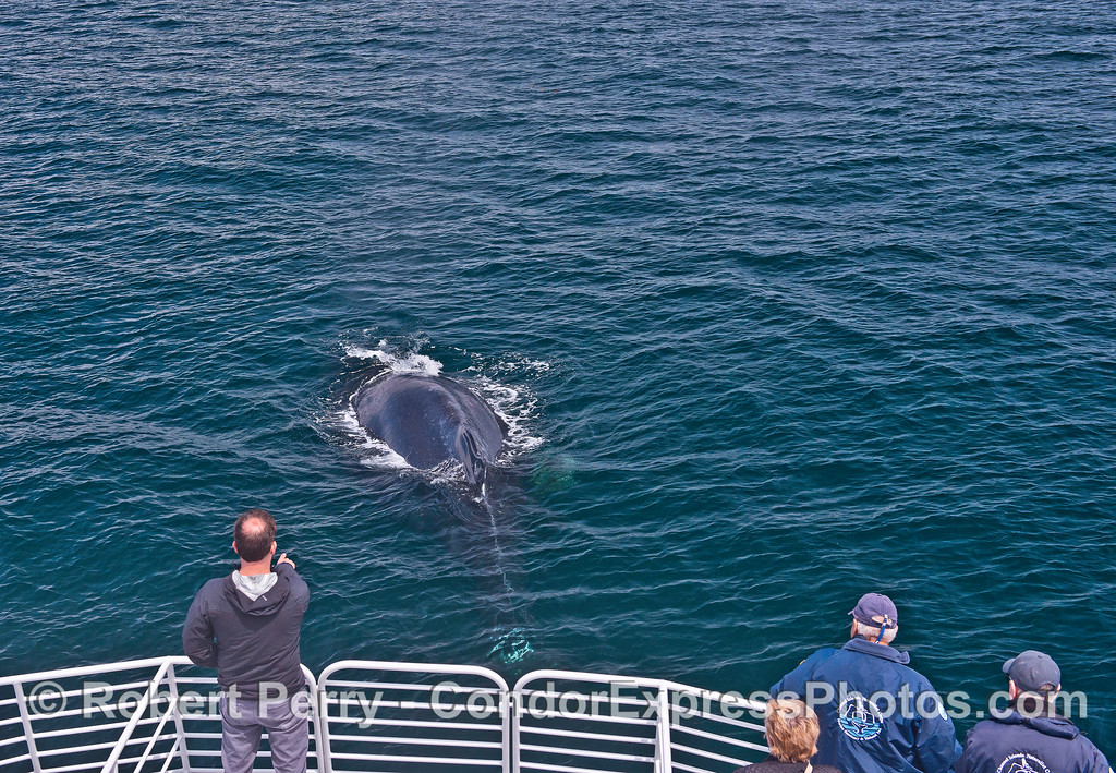 Friendly humpback whale visits its fan club.