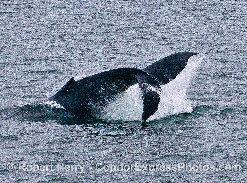 IMAGE 1 OF 2:  HUMPBACK TAIL THROW SEQUENCE POWER STROKE.