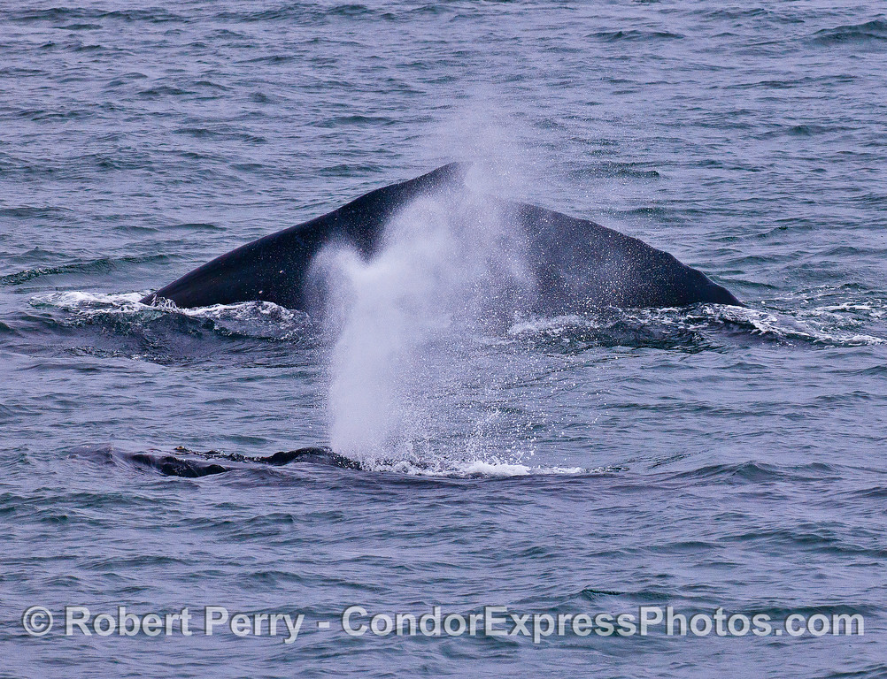 TWO MORE TIGHT HUMPBACKS