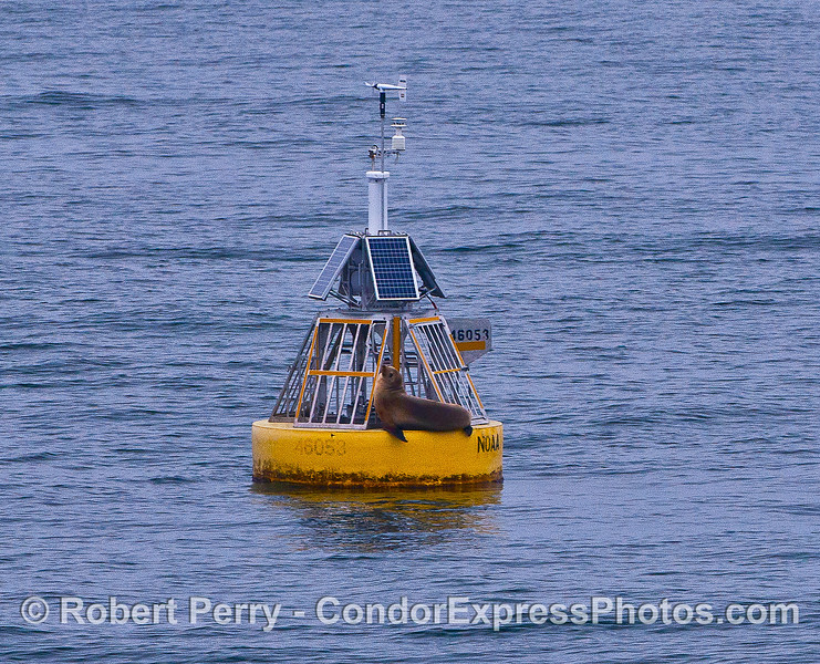 SO-CALLED EAST CHANNEL BUOY IS REALLY IN THE MID-CHANNEL BUT IT'S DATA IS INVALUABLE