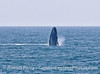 Image 2 of 6 in a sequence:   second humpback whale breach.