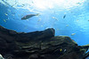 20160528-Brielle Aquarium-037