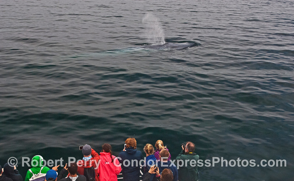 Whale fans say hello to a friendly blue whale.