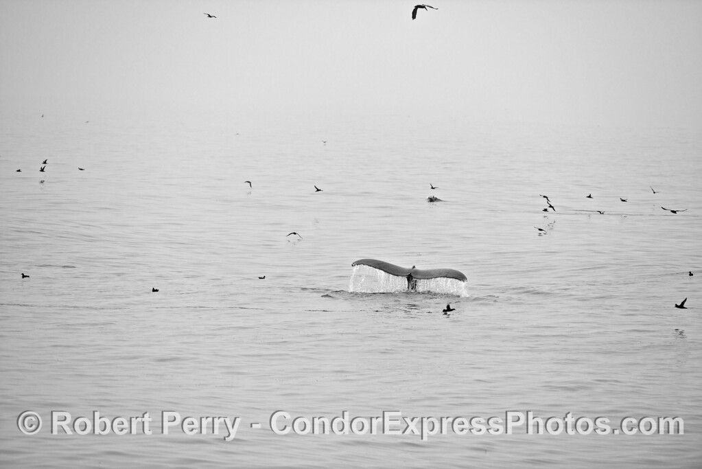 Black and white image on a foggy day with lots of action