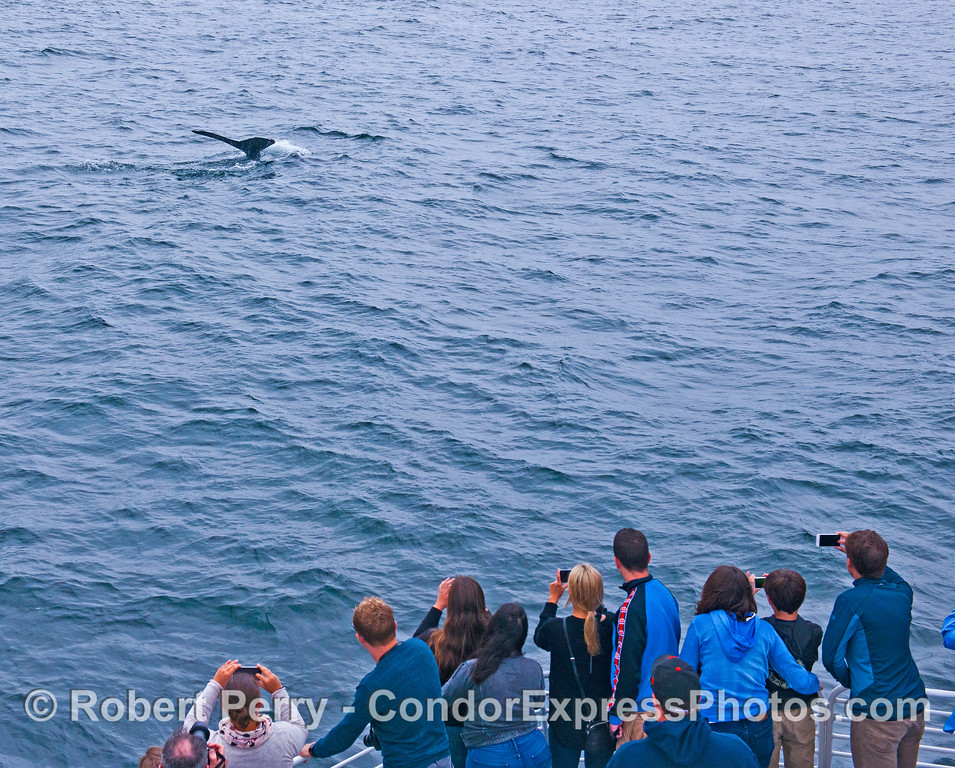 Whale fans get a close look and great photo op - humpback whale tail flukes