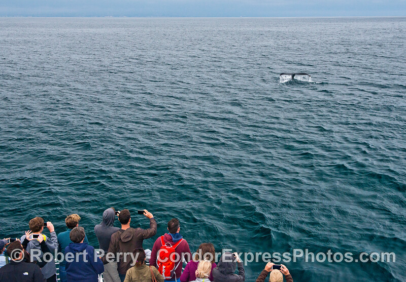 Photo opp - humpback flukes-up for its fans