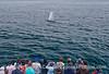 Humpback whale fan club