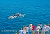 Whale fans get a close look at a very friendly humpback whale.
