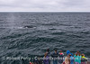 Whale-watchers get a close look at a friendly humpback whale.