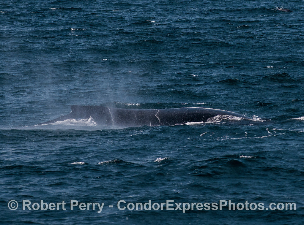 Moderate winds and a humpback whale.