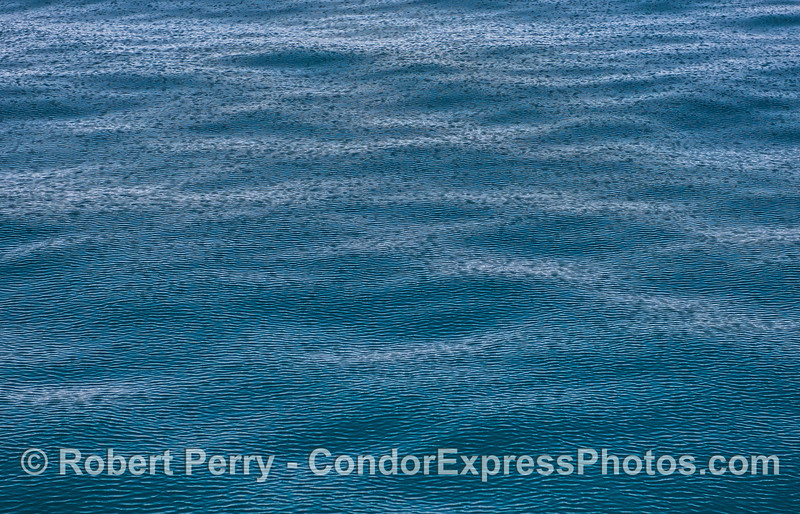 Ripples and cat's paws on flat ocean surface