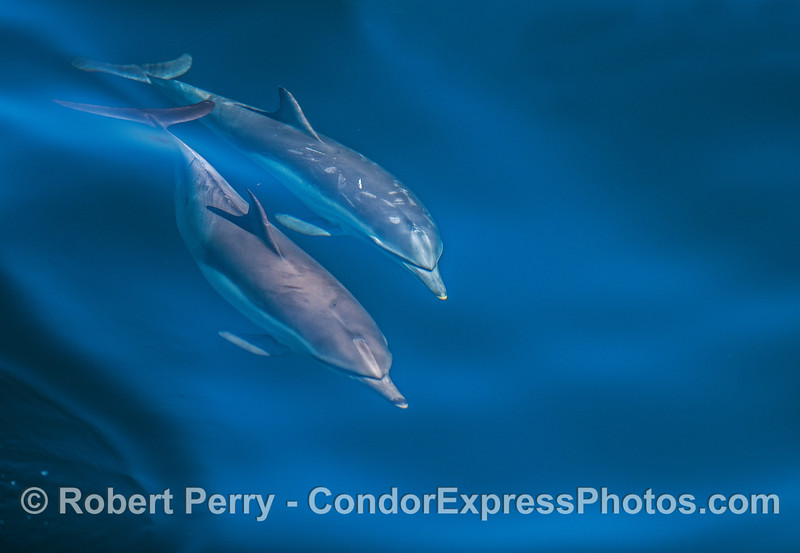 Two dolphins side by side