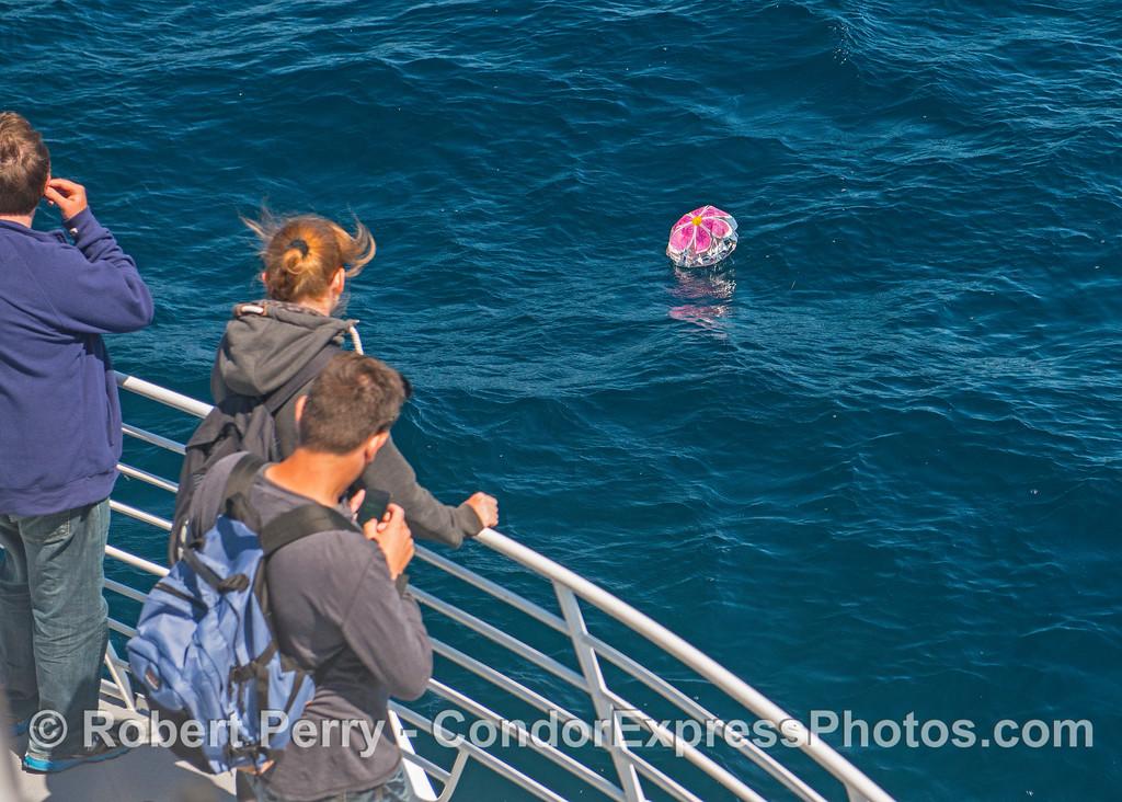 mylar balloon rescue 2016 09-14 SB Channel--b--002